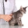 Ветеринарные клиники в Инте